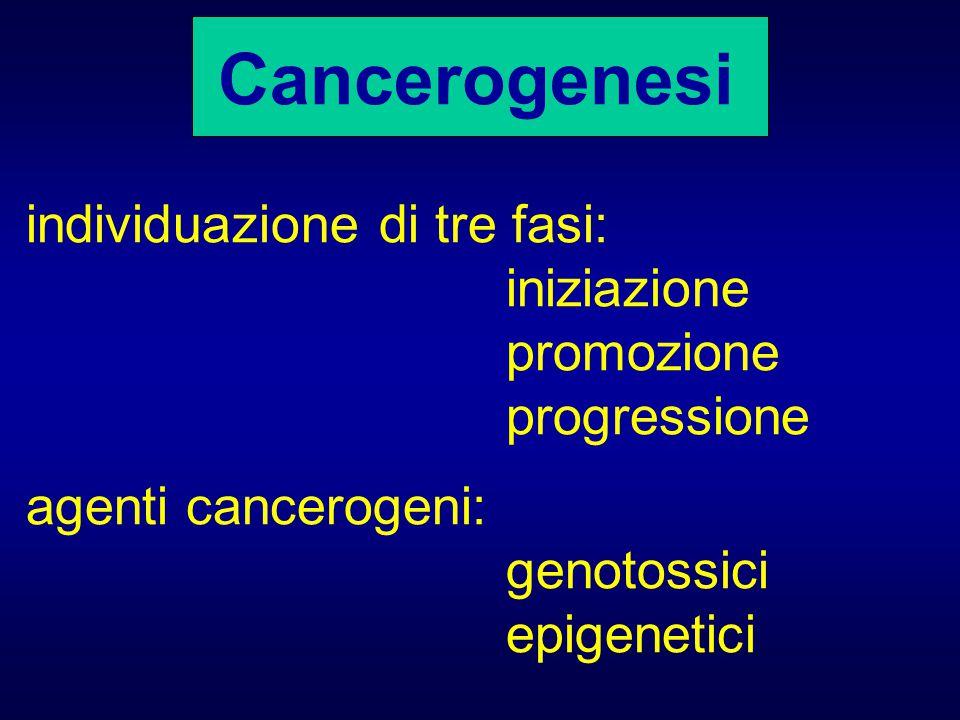 Cancerogenesi individuazione di tre fasi: iniziazione promozione