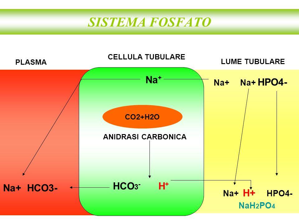 SISTEMA FOSFATO Na+ Na+ HCO3- Na+ Na+ HPO4- Na+ H+ HPO4-