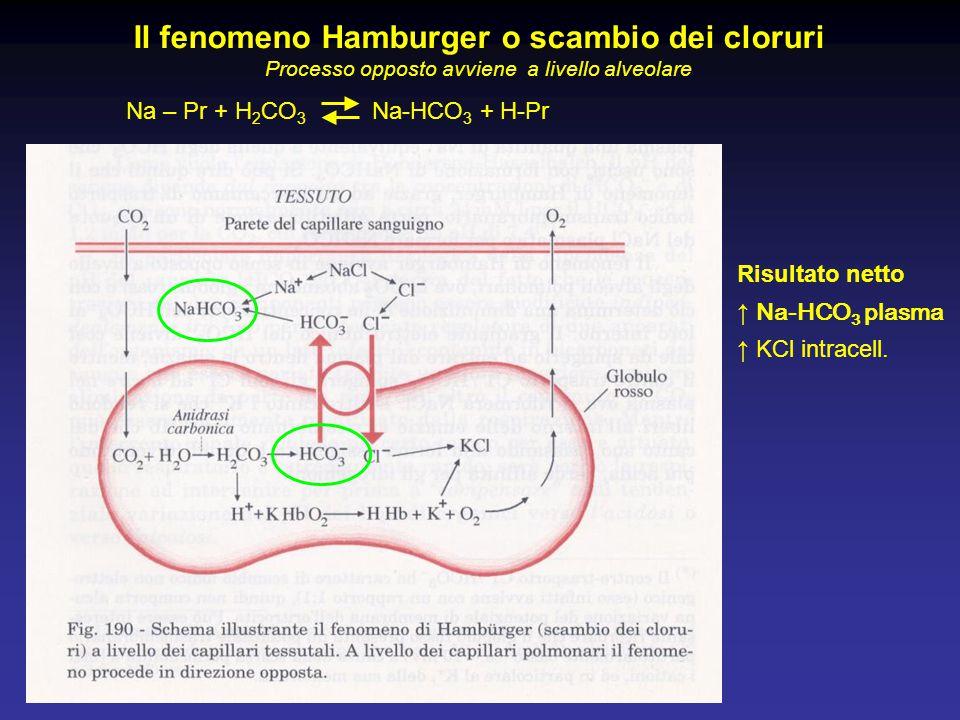 Il fenomeno Hamburger o scambio dei cloruri
