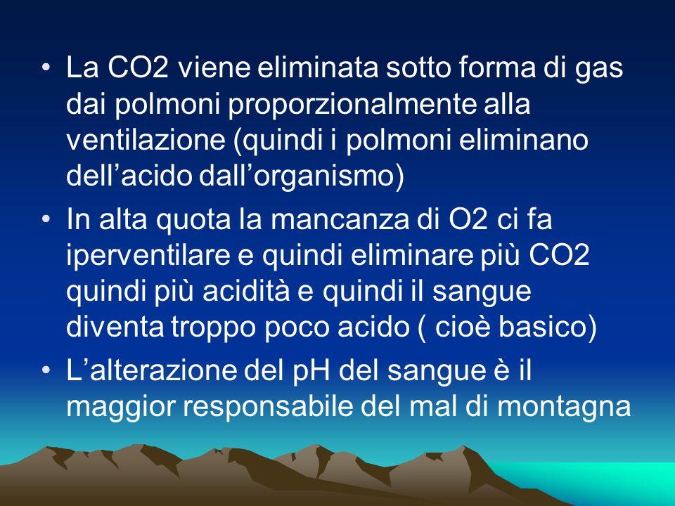 La CO2 viene eliminata sotto forma di gas dai polmoni proporzionalmente alla ventilazione (quindi i polmoni eliminano dell'acido dall'organismo)