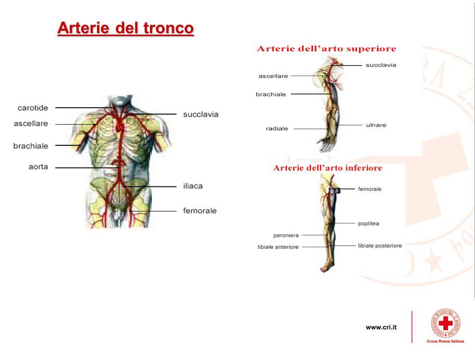 Arterie del tronco