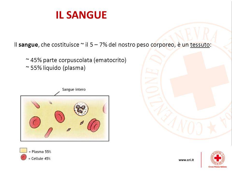 IL SANGUE ll sangue, che costituisce ~ il 5 – 7% del nostro peso corporeo, è un tessuto: ~ 45% parte corpuscolata (ematocrito)