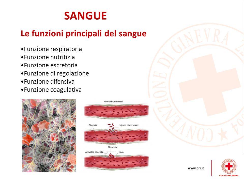 SANGUE Le funzioni principali del sangue Funzione respiratoria