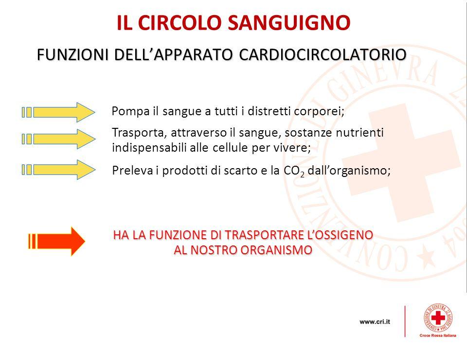 FUNZIONI DELL'APPARATO CARDIOCIRCOLATORIO