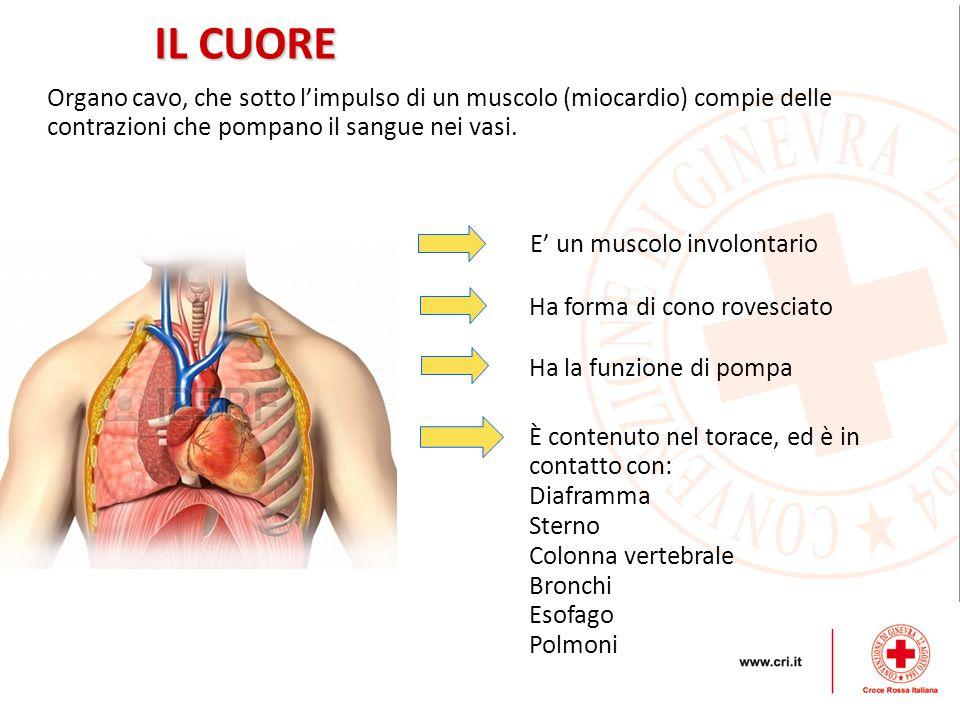 IL CUORE Organo cavo, che sotto l'impulso di un muscolo (miocardio) compie delle contrazioni che pompano il sangue nei vasi.