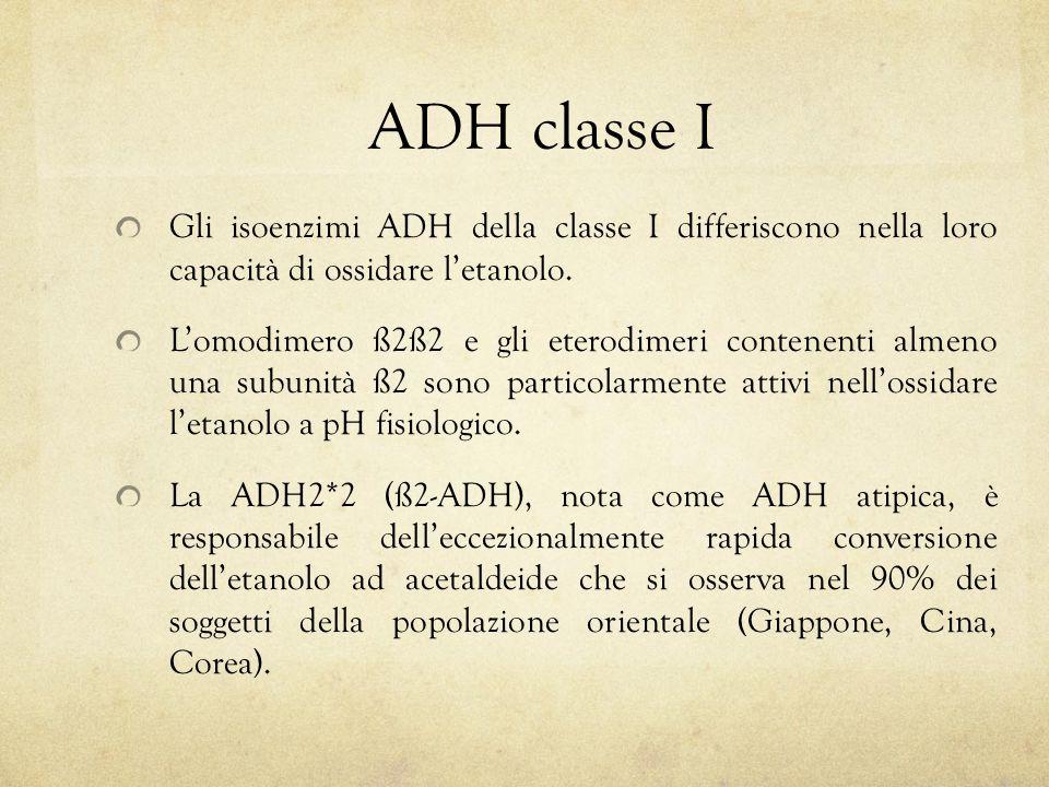 ADH classe I Gli isoenzimi ADH della classe I differiscono nella loro capacità di ossidare l'etanolo.