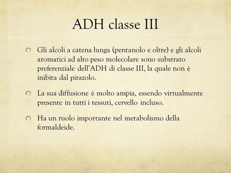 ADH classe III