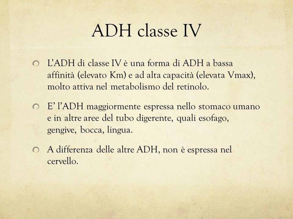 ADH classe IV