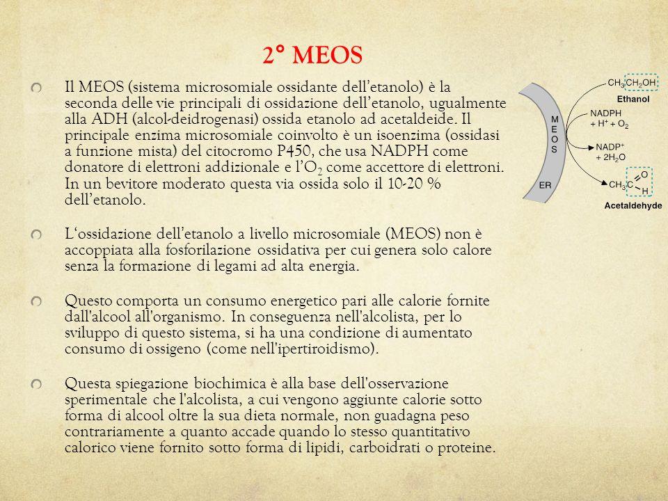 2° MEOS
