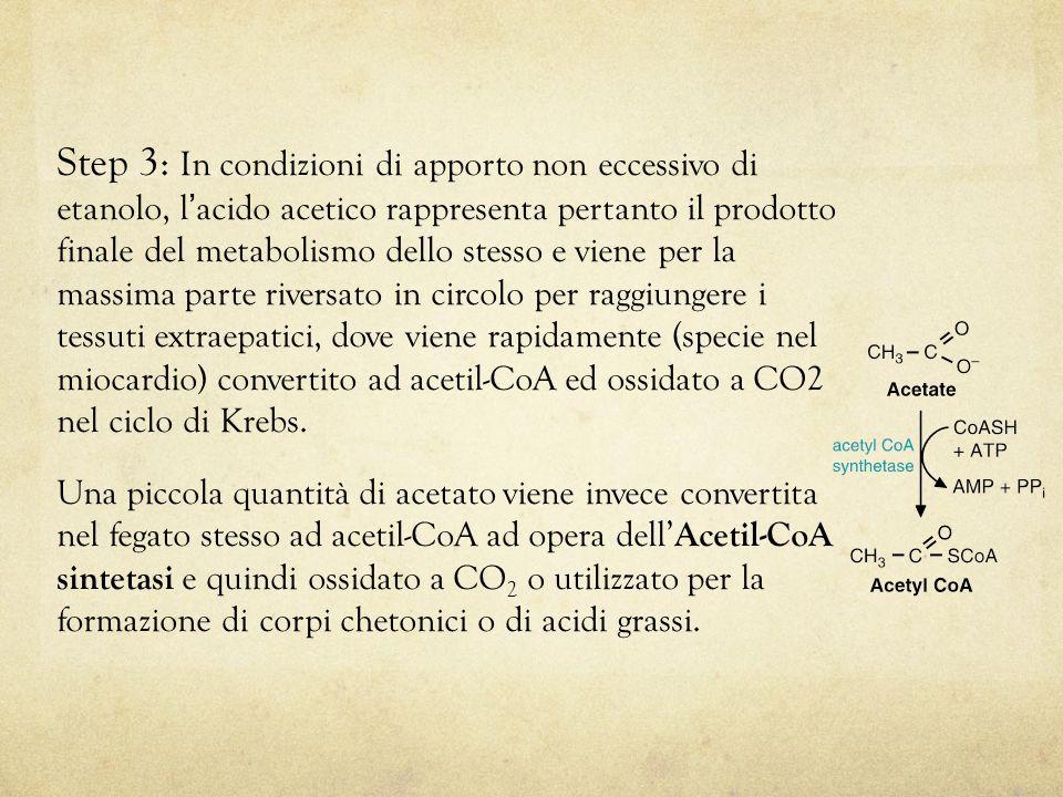 Step 3: In condizioni di apporto non eccessivo di etanolo, l'acido acetico rappresenta pertanto il prodotto finale del metabolismo dello stesso e viene per la massima parte riversato in circolo per raggiungere i tessuti extraepatici, dove viene rapidamente (specie nel miocardio) convertito ad acetil-CoA ed ossidato a CO2 nel ciclo di Krebs.