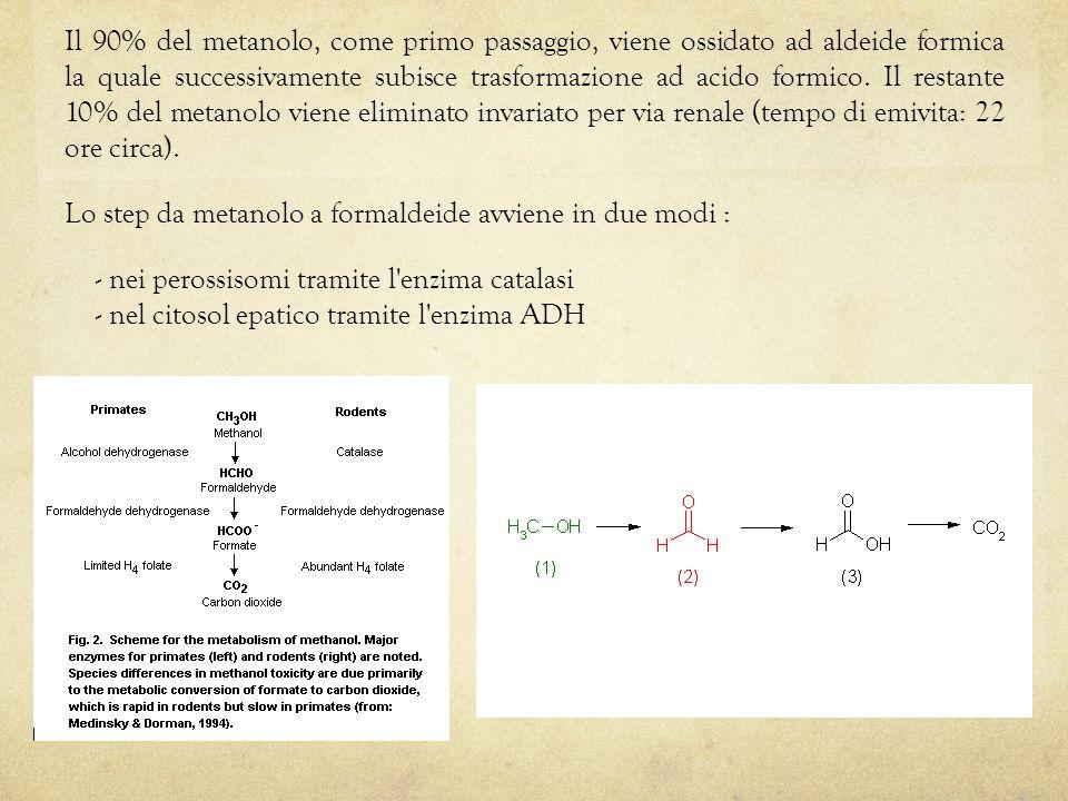 Il 90% del metanolo, come primo passaggio, viene ossidato ad aldeide formica la quale successivamente subisce trasformazione ad acido formico.