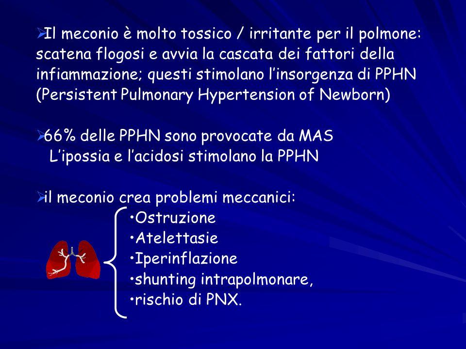 Il meconio è molto tossico / irritante per il polmone: scatena flogosi e avvia la cascata dei fattori della infiammazione; questi stimolano l'insorgenza di PPHN (Persistent Pulmonary Hypertension of Newborn)