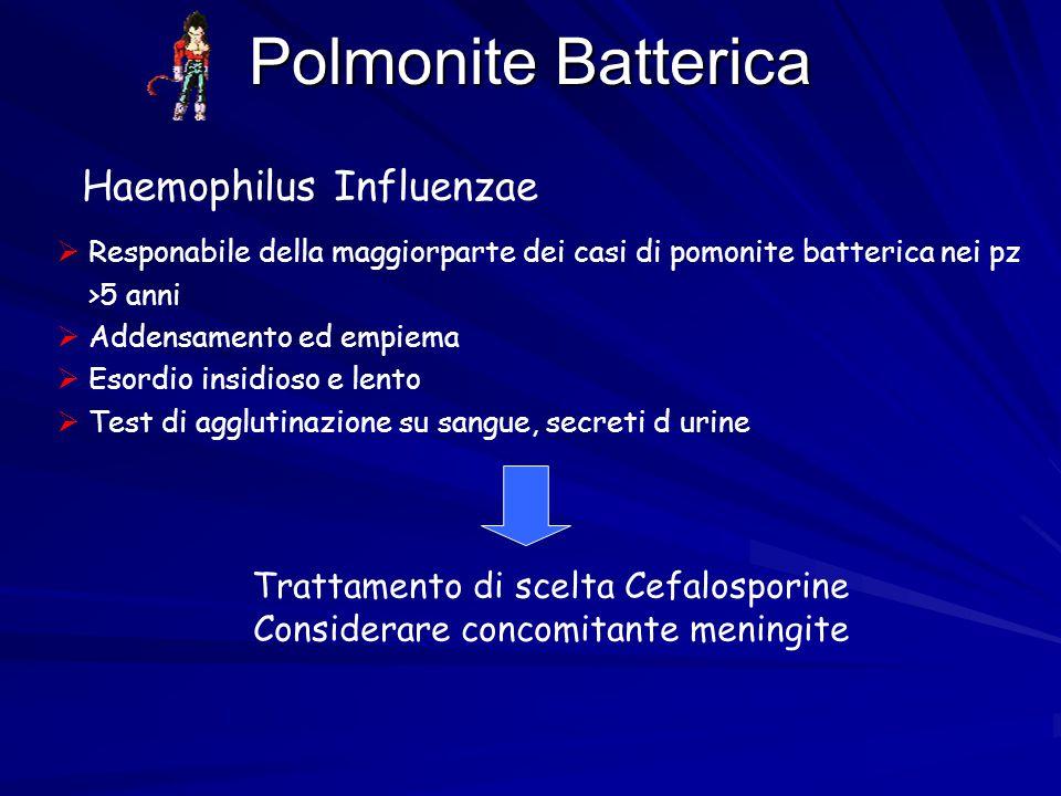 Polmonite Batterica Haemophilus Influenzae