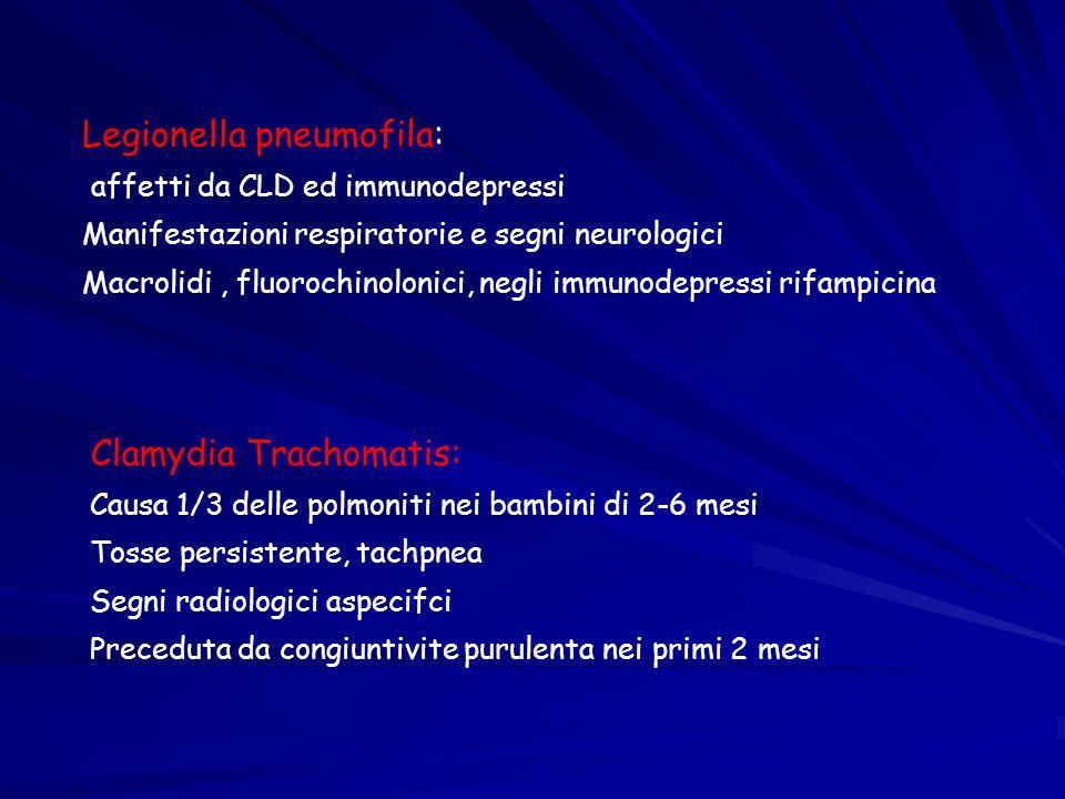 Legionella pneumofila: