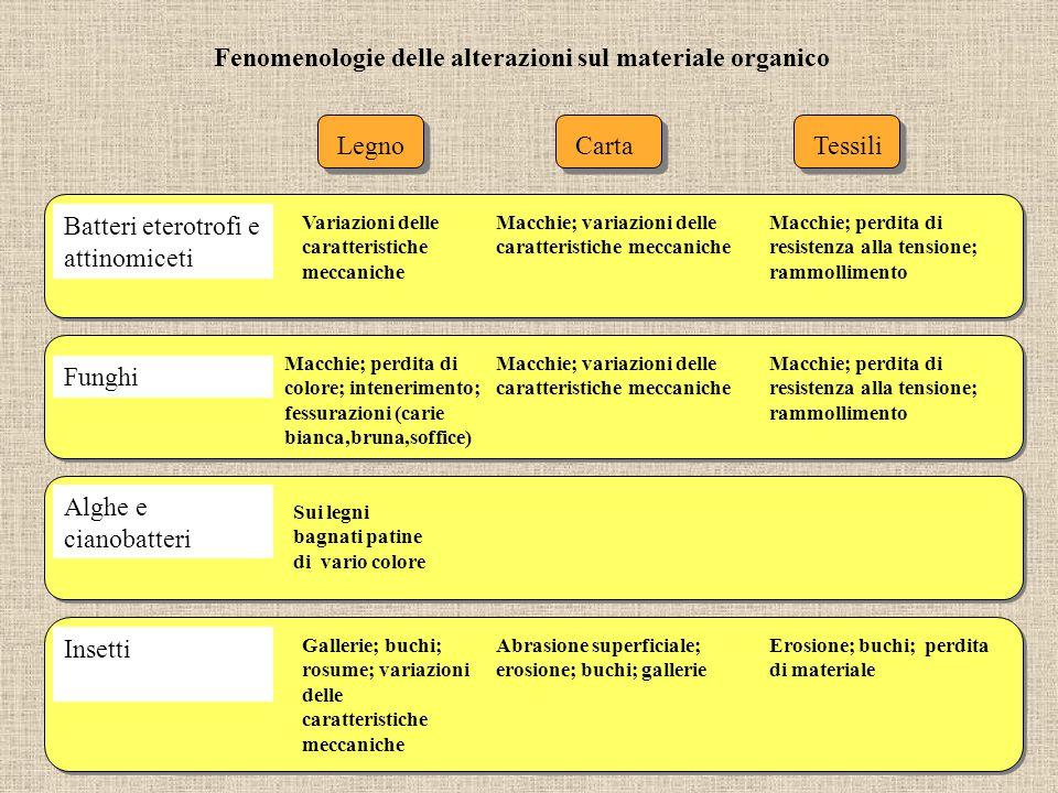Fenomenologie delle alterazioni sul materiale organico