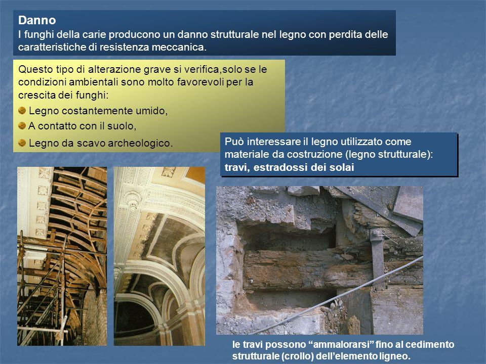 Danno I funghi della carie producono un danno strutturale nel legno con perdita delle caratteristiche di resistenza meccanica.