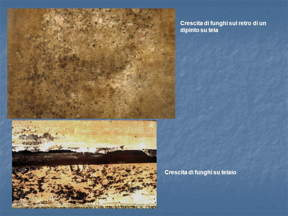 Crescita di funghi sul retro di un dipinto su tela