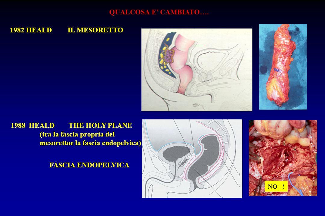(tra la fascia propria del mesorettoe la fascia endopelvica)