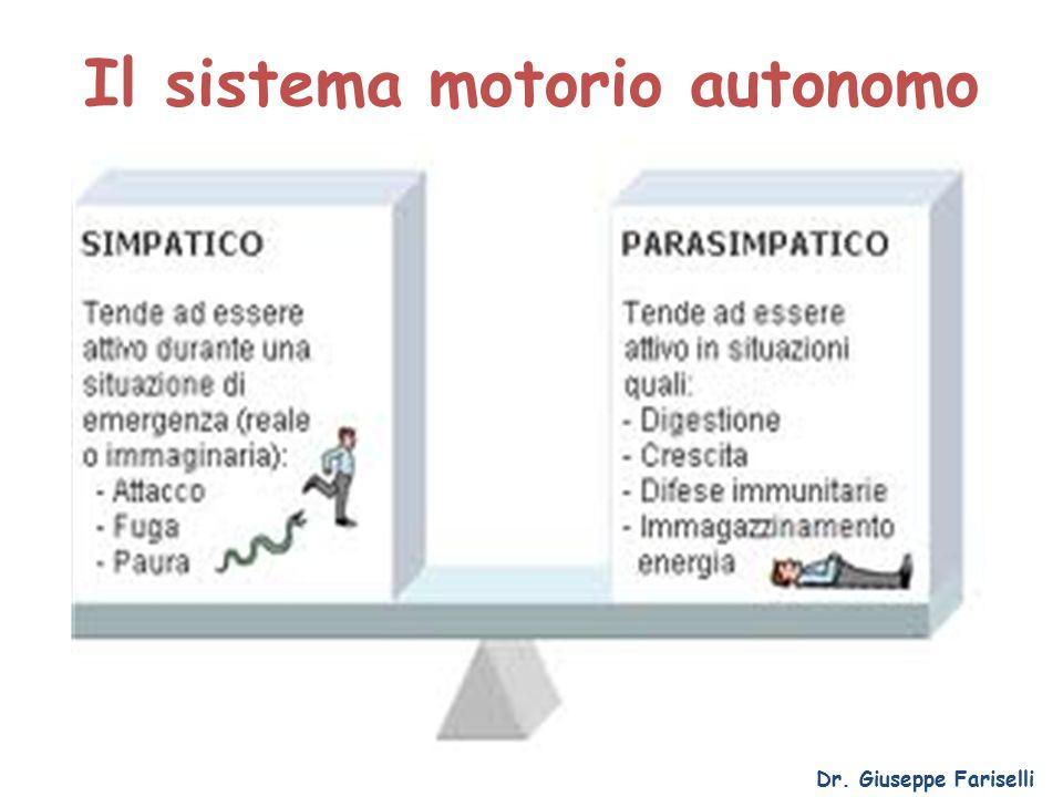 Il sistema motorio autonomo