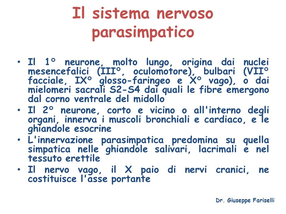 Il sistema nervoso parasimpatico