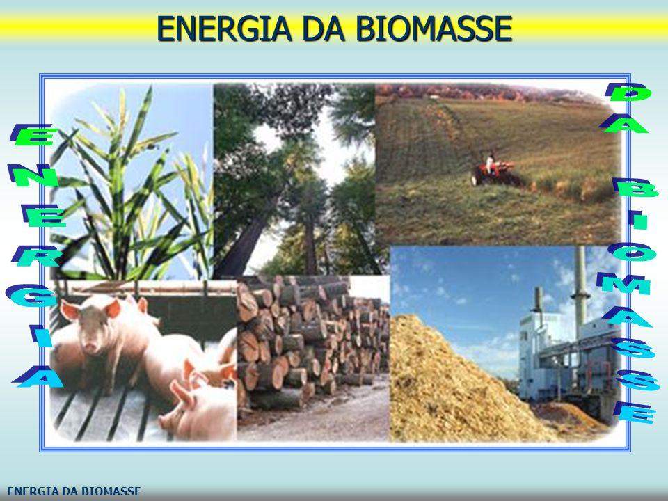 ENERGIA DA BIOMASSE ENERGIA DA BIOMASSE ENERGIA DA BIOMASSE