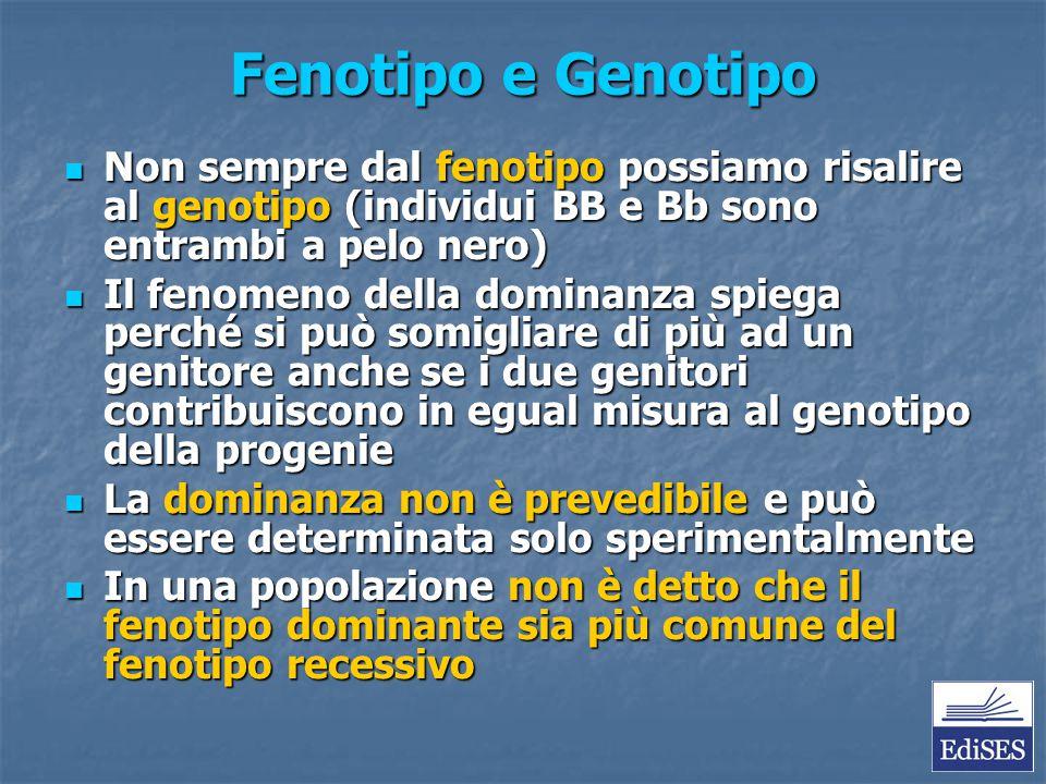 Fenotipo e Genotipo Non sempre dal fenotipo possiamo risalire al genotipo (individui BB e Bb sono entrambi a pelo nero)