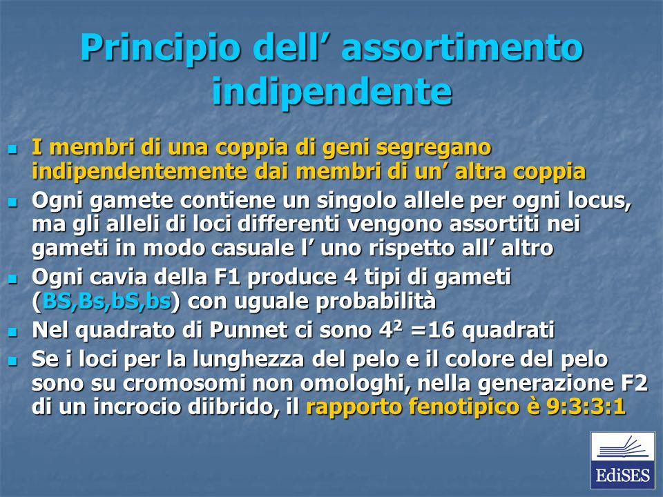 Principio dell' assortimento indipendente