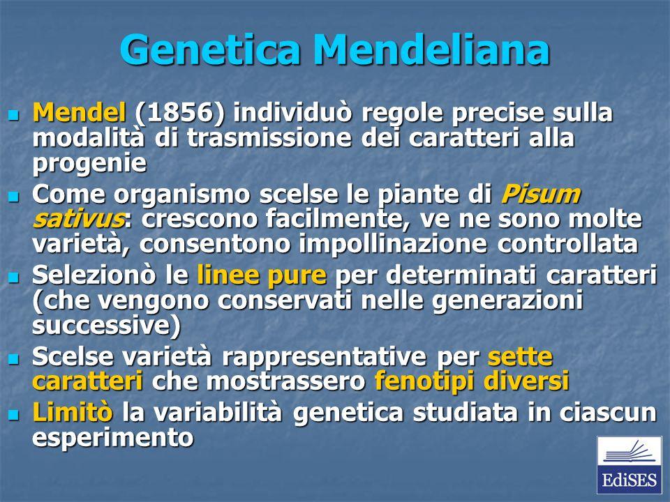 Genetica Mendeliana Mendel (1856) individuò regole precise sulla modalità di trasmissione dei caratteri alla progenie.