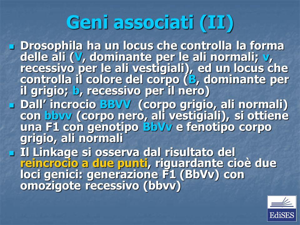 Geni associati (II)