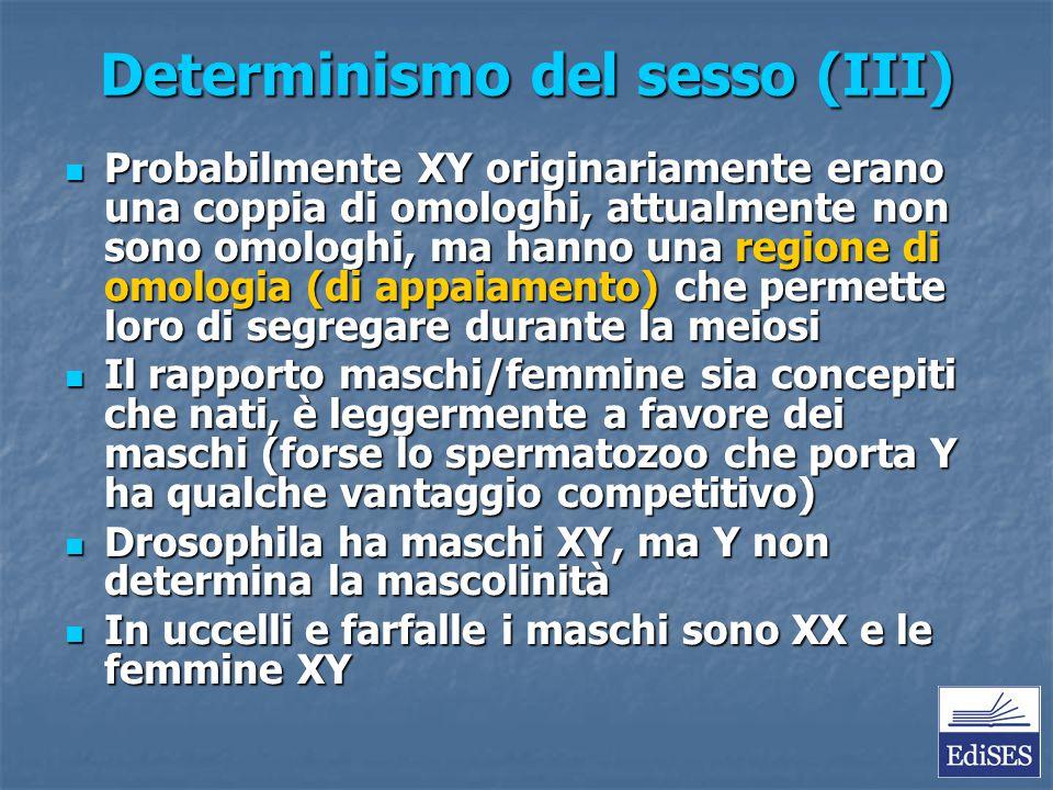 Determinismo del sesso (III)