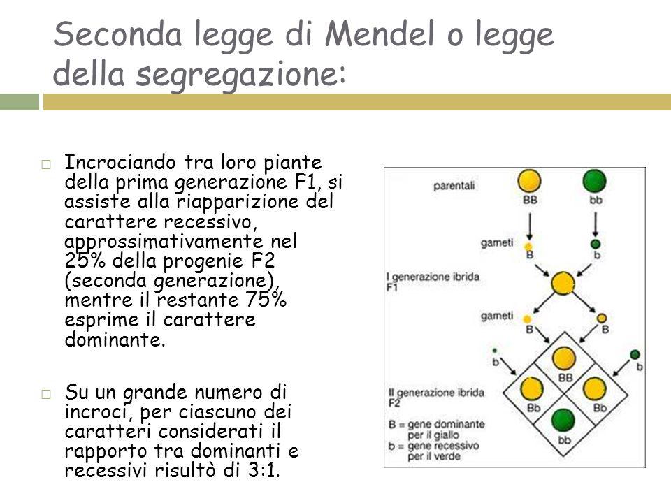 Seconda legge di Mendel o legge della segregazione:
