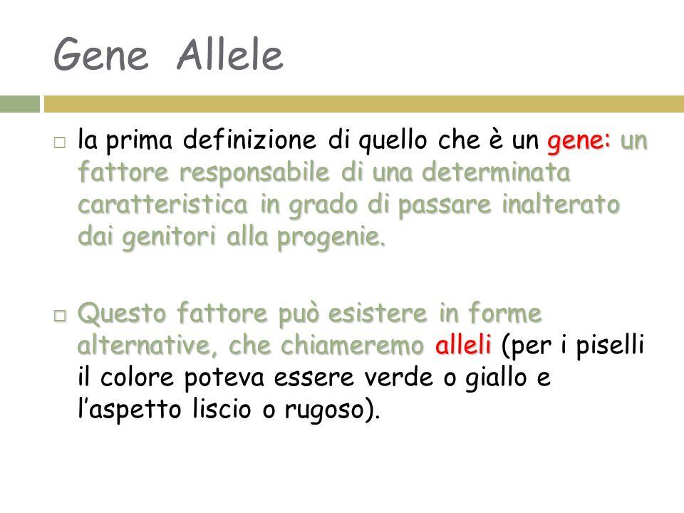 Gene Allele