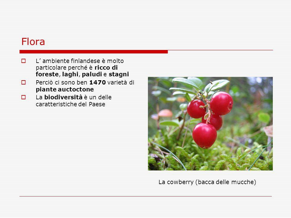 La cowberry (bacca delle mucche)