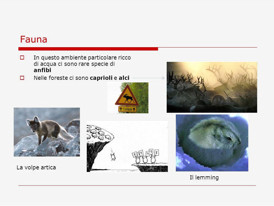 Fauna In questo ambiente particolare ricco di acqua ci sono rare specie di anfibi. Nelle foreste ci sono caprioli e alci.