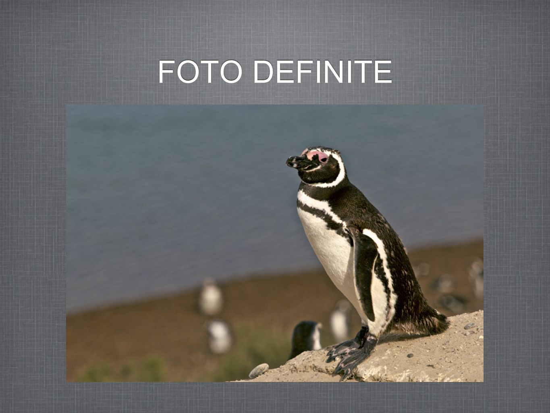 FOTO DEFINITE
