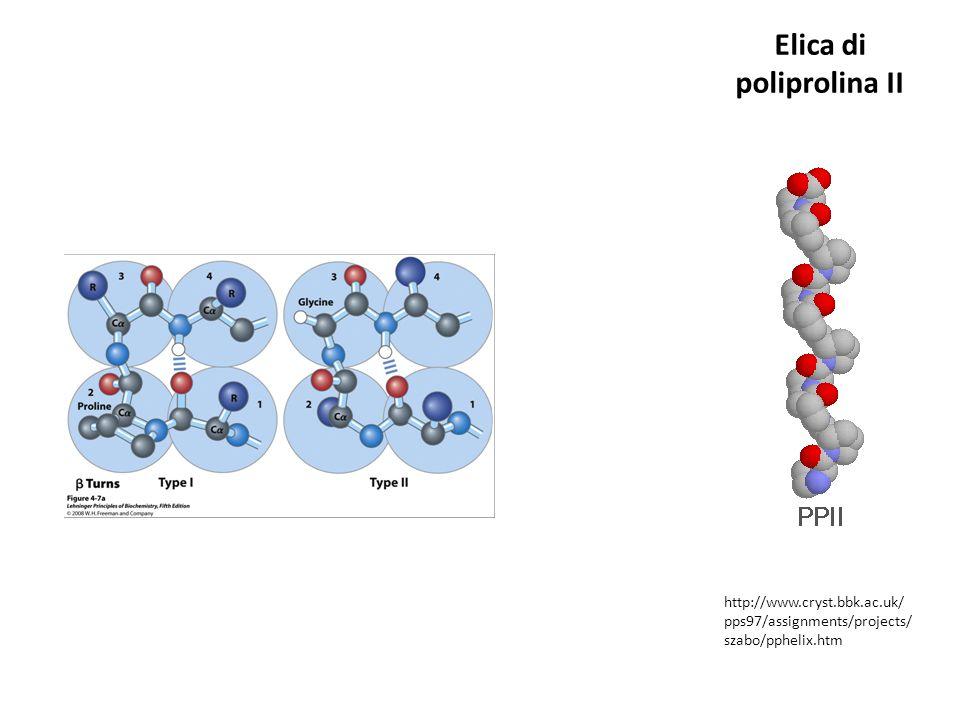Elica di poliprolina II