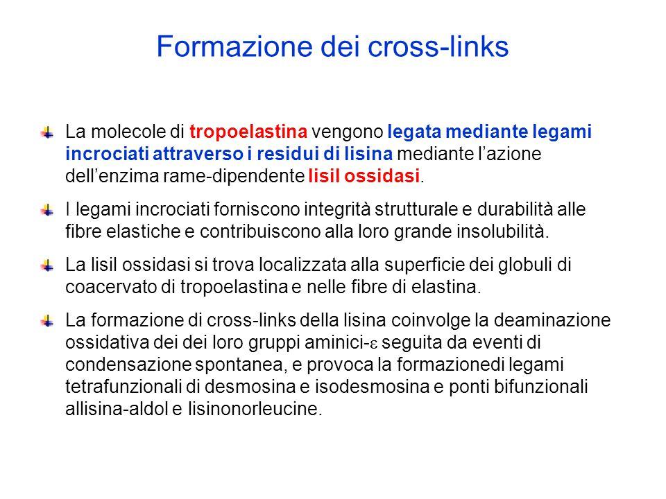 Formazione dei cross-links