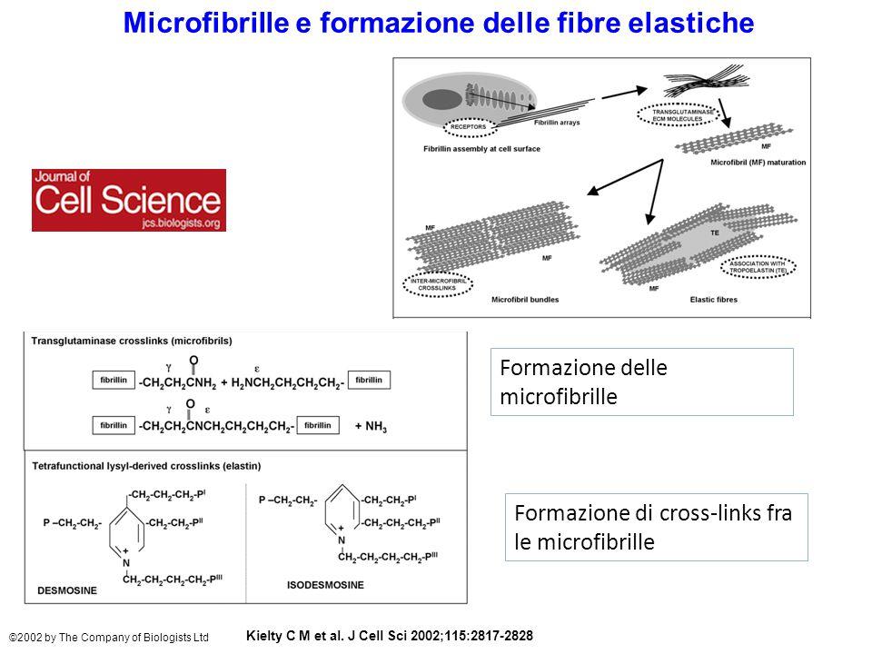 Microfibrille e formazione delle fibre elastiche