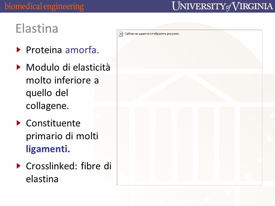 Elastina Proteina amorfa.