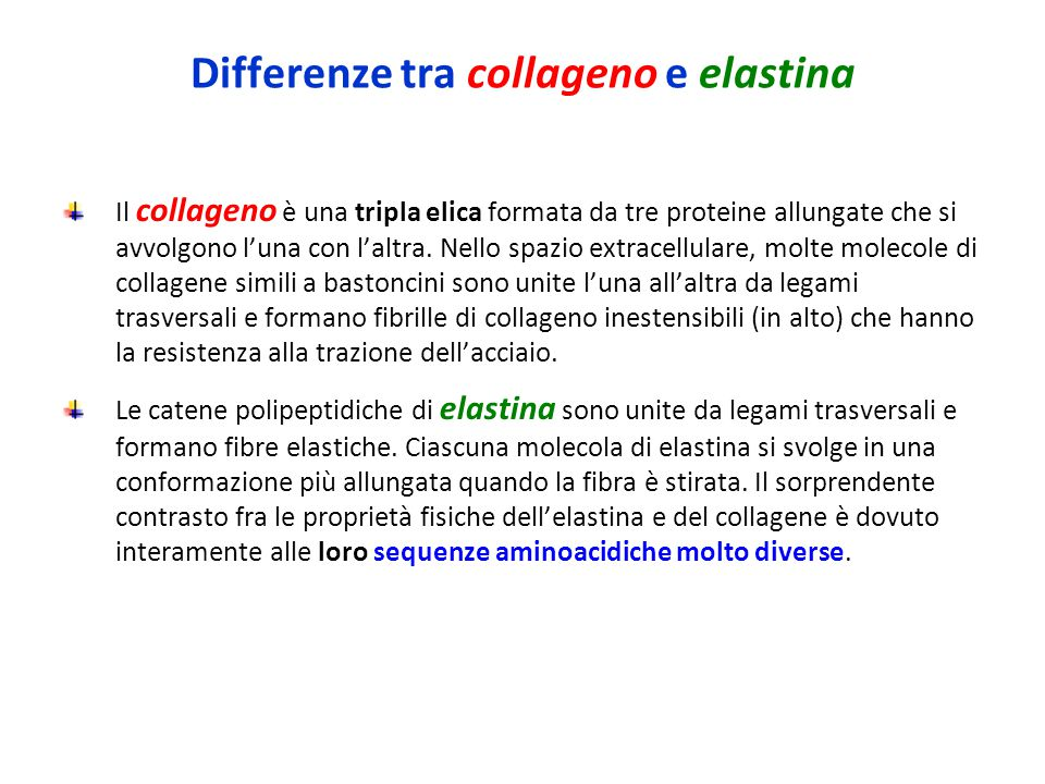 elastina ppt video online scaricare