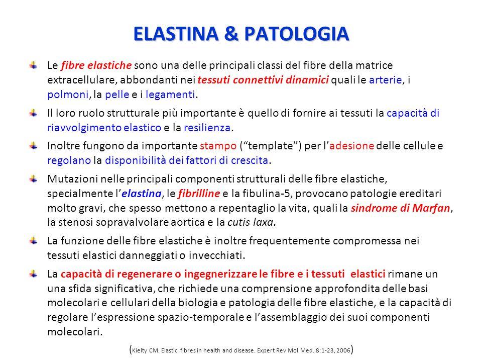 ELASTINA & PATOLOGIA
