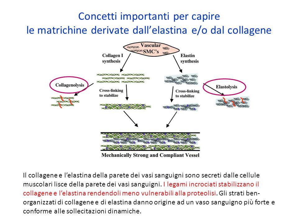 Concetti importanti per capire le matrichine derivate dall'elastina e/o dal collagene