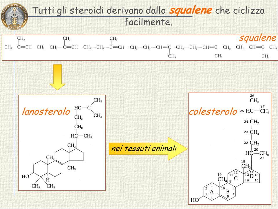 Tutti gli steroidi derivano dallo squalene che ciclizza facilmente.