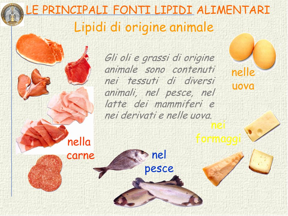 Lipidi di origine animale