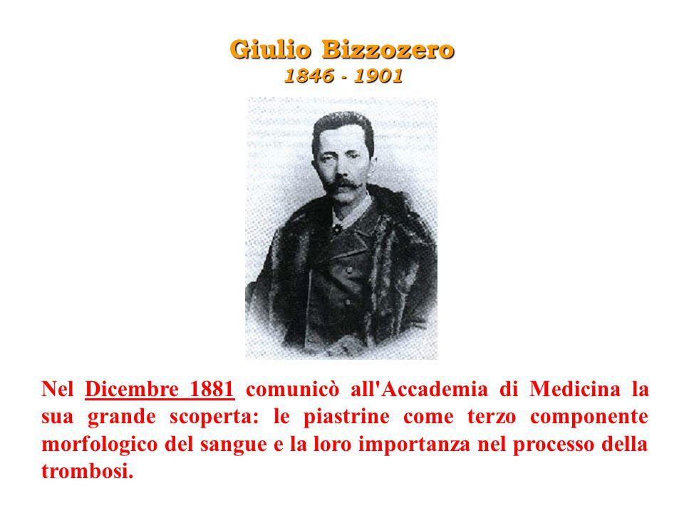 Giulio Bizzozero 1846 - 1901.