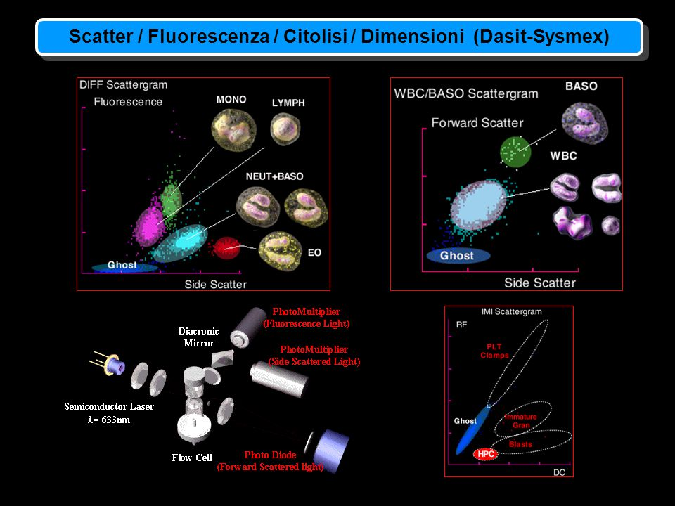 Scatter / Fluorescenza / Citolisi / Dimensioni (Dasit-Sysmex)