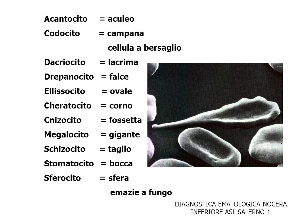 DIAGNOSTICA EMATOLOGICA NOCERA INFERIORE ASL SALERNO 1