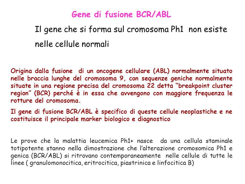 Gene di fusione BCR/ABL