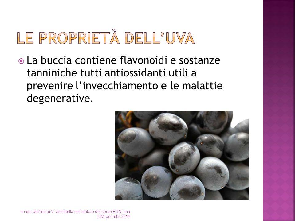 Le proprietà dell'uva
