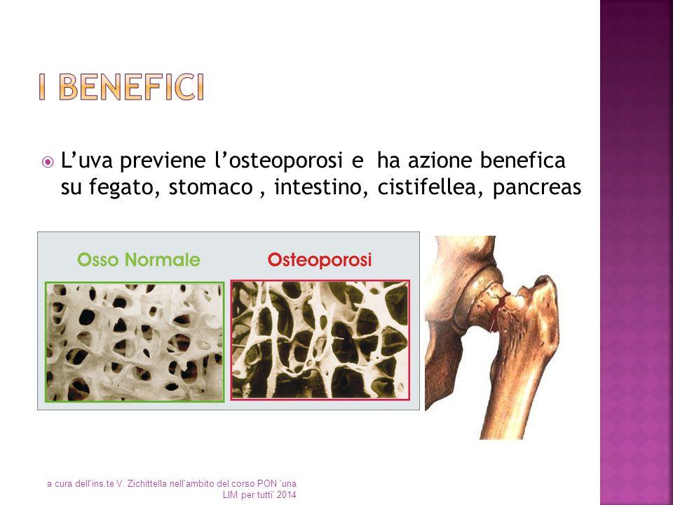 I benefici L'uva previene l'osteoporosi e ha azione benefica su fegato, stomaco , intestino, cistifellea, pancreas.